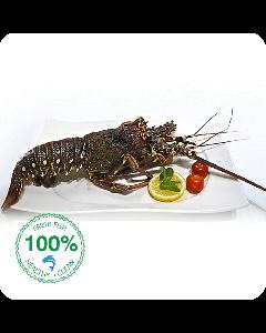 Lobster I Estacosa